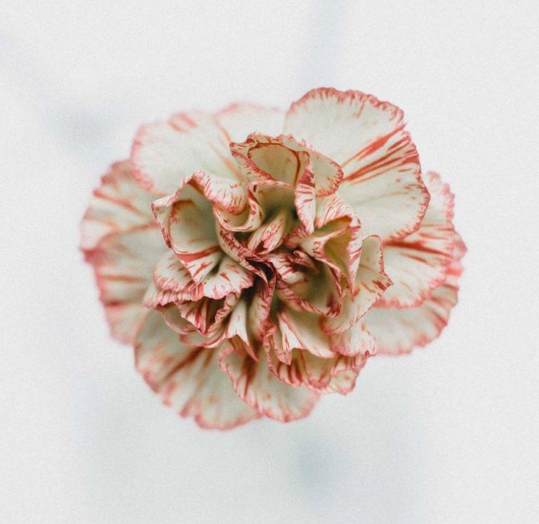 release and rise azalea